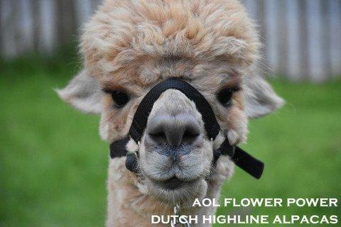 AOL FLOWER POWER