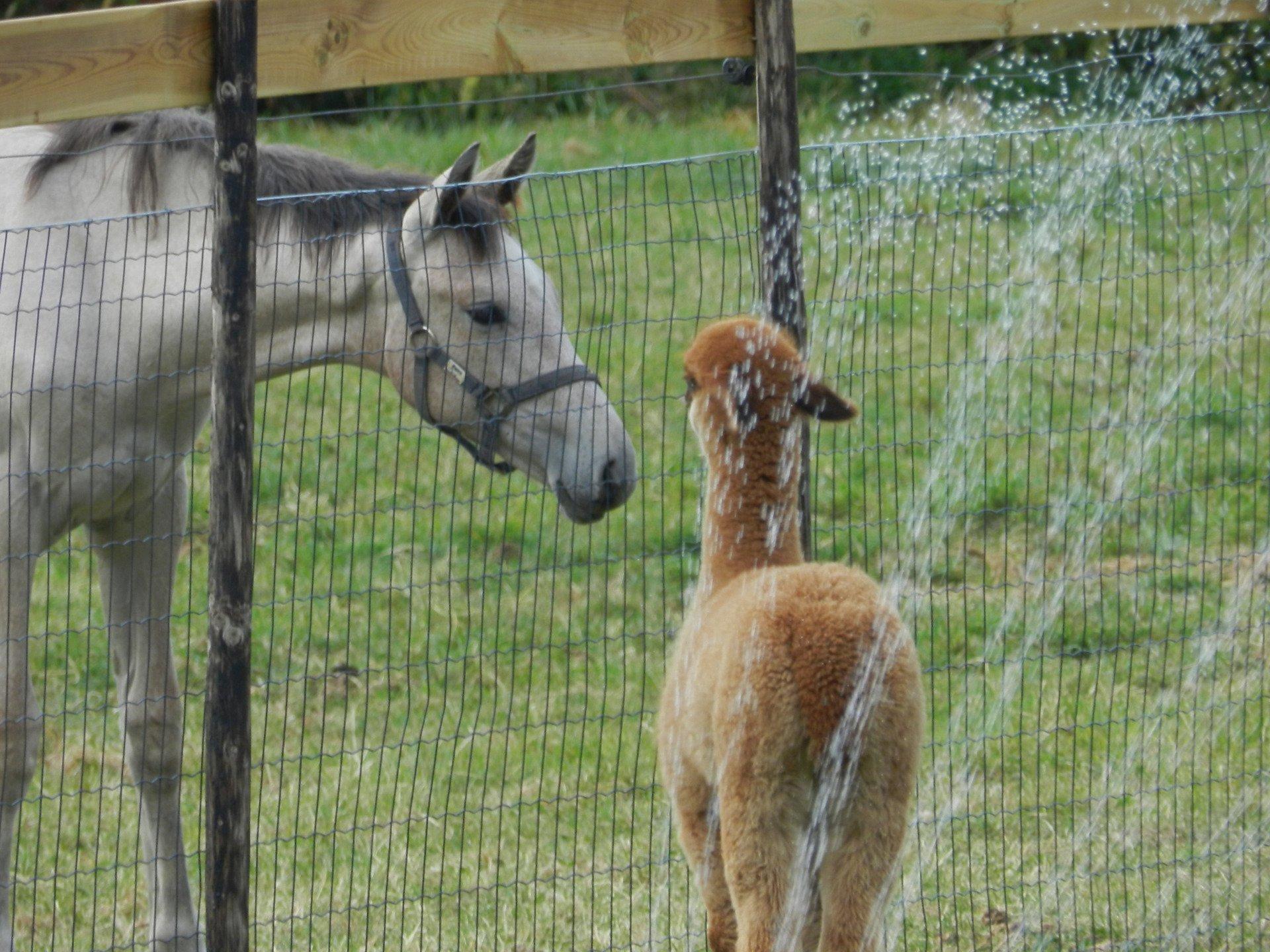 Appie — aangeboden door AlpacaWarf