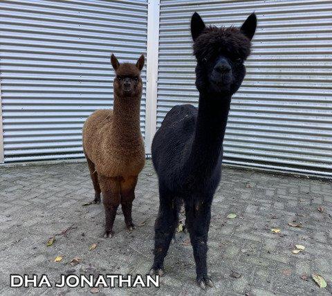 DHA JONATHAN
